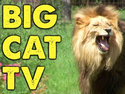 Big Cat Rescue TV