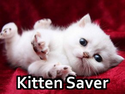 Kitten Saver