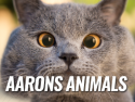 Aaron's Animals
