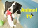 Animal TV