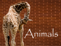 Animals by Photo Ronin