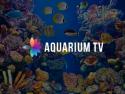AquariumTV