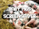 Baby Pigs Screensaver