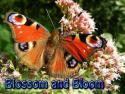 Blossom and Bloom