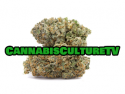 Cannabis Culture TV