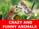 Crazy And Funny Animals