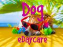 Dog eDaycare