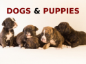 Dogs & Puppies