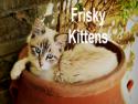 Frisky Kittens