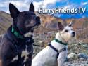 FurryFriendsTV