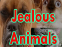 Jealous Animals