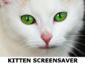 Kitten Screensaver