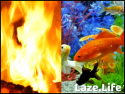 Laze.Life - Special Interest