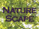 Nature Scape