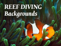 Reef Diving Backgrounds