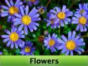 SCREENZAVER.Flowers