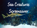 Sea Creatures Screensaver