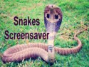 Snakes Screensaver
