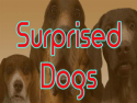 Surprised Dogs