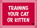 Training Your Cat or Kitten