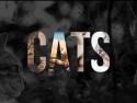 U - Cats