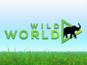 Wild World - Animal TV