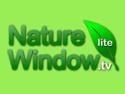 Nature Window TV Lite