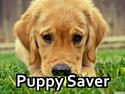 Puppy Saver