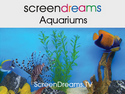 Screen Dreams - Aquariums