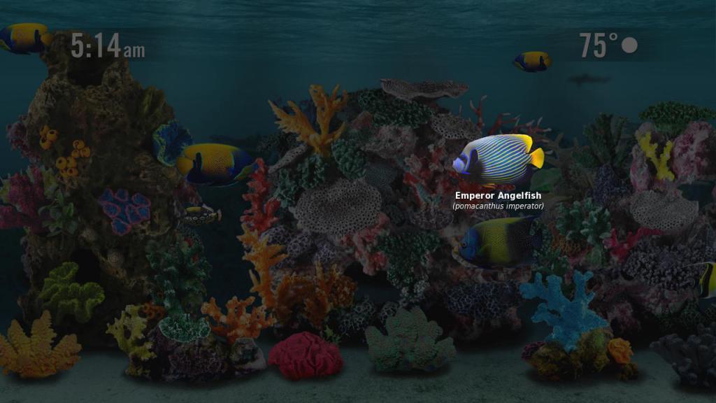 Aquarium Screensaver | Roku Guide