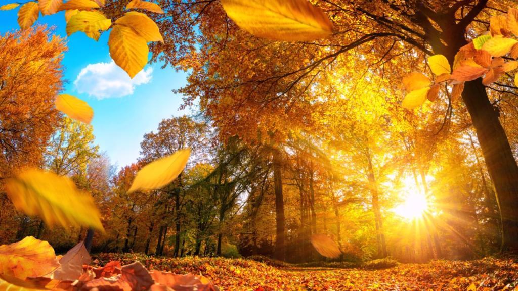 Autumn Screensaver Roku Guide